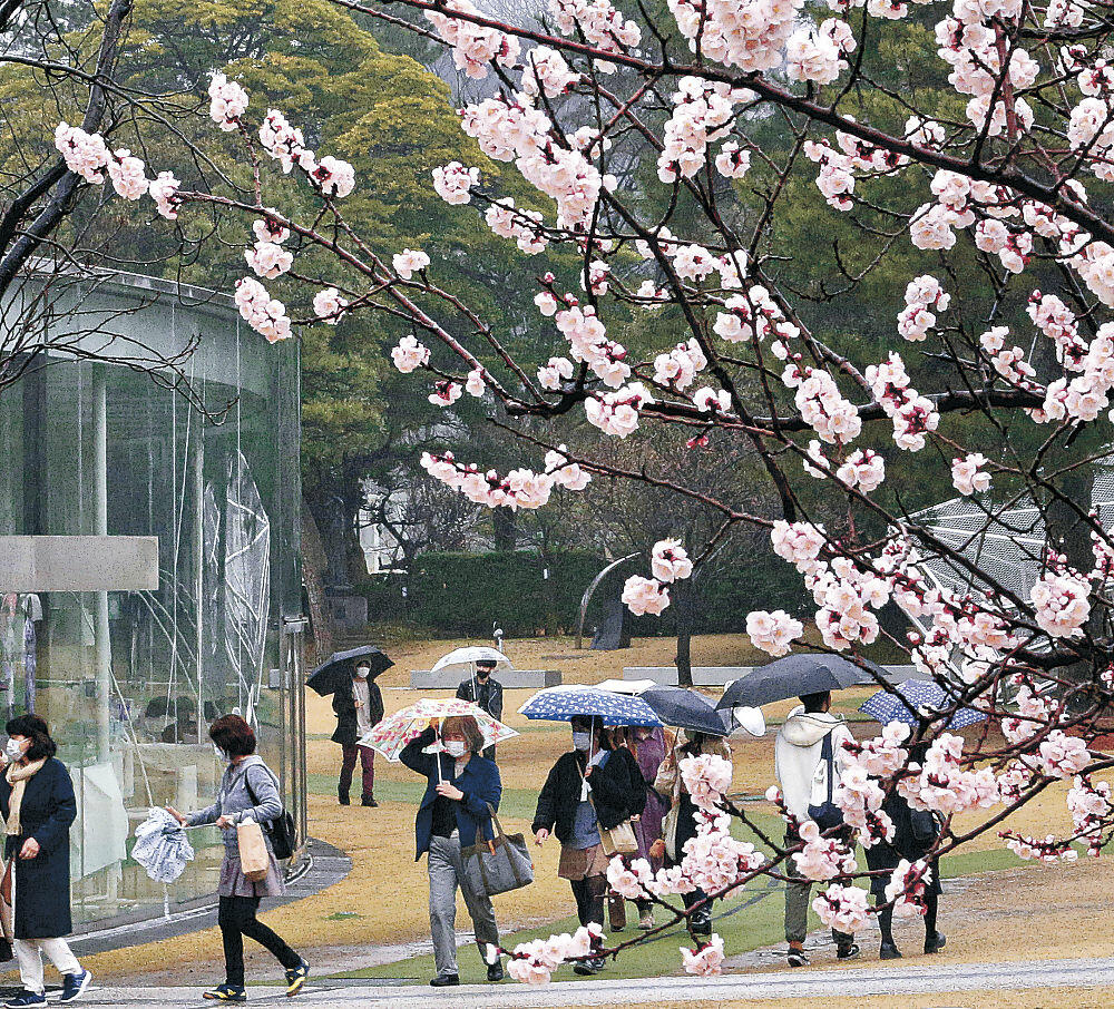 傘を手に散策を楽しむ来館者=金沢21世紀美術館