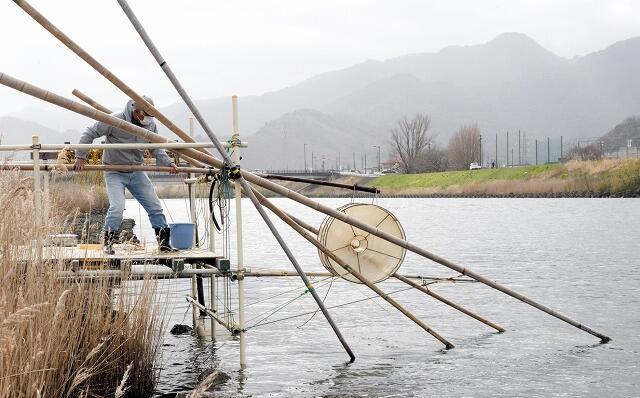 小浜市の南川で始まっているイサザ漁。風物詩の足場はとうとう1基だけになった=3月17日、福井県小浜市竹原
