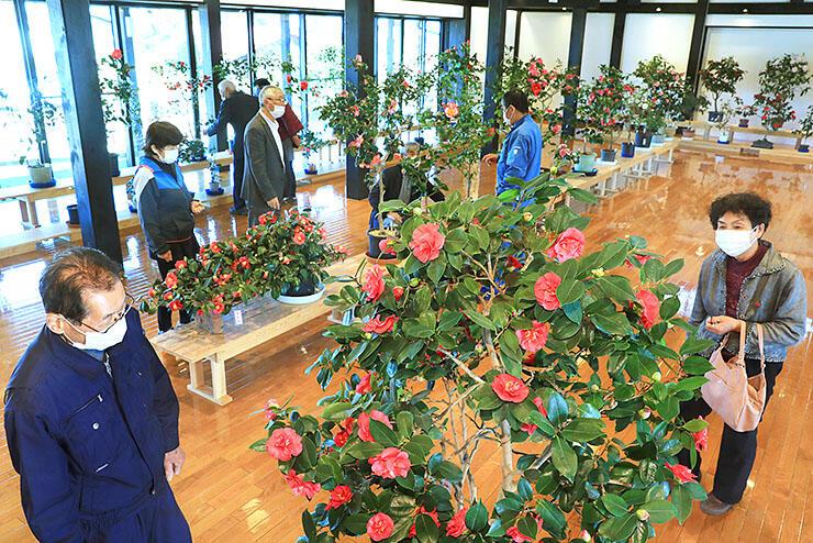 鮮やかな花を咲かせた鉢が並ぶ「椿まつり」の会場=いのくち椿館