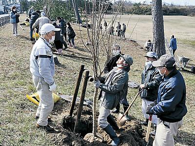 千里浜に桜の名所を 運動公園 40本以上の並木目指す