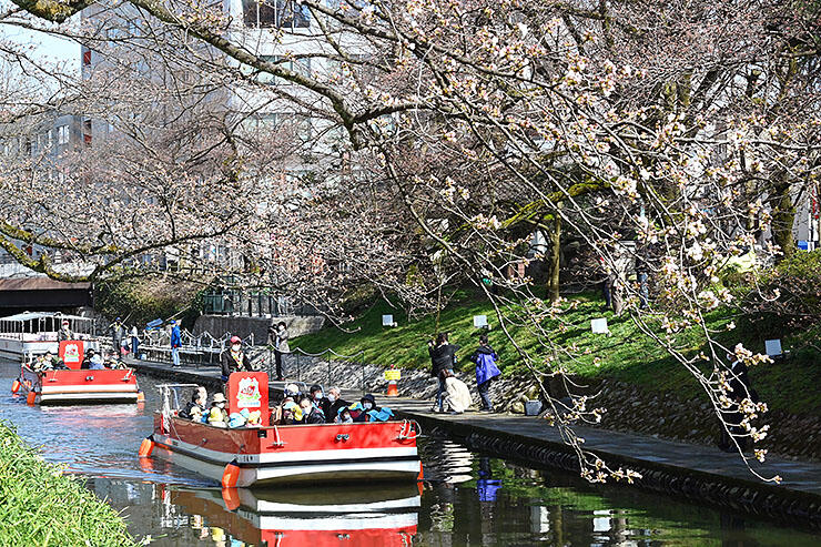 咲き始めた桜の下を進む遊覧船=松川
