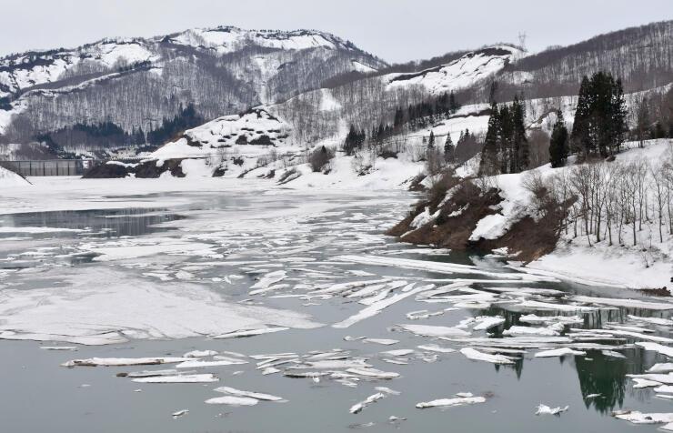 雪の塊が流氷のように浮かぶ「雪流れ」の光景=魚沼市大白川の破間川ダム