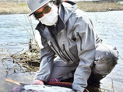 初物サクラマス笑顔 鯖江市の日野川、例年より早い釣果