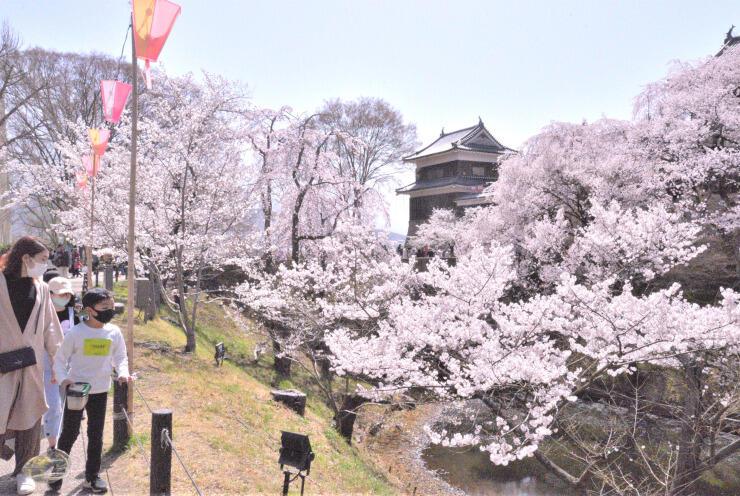 1日から「第18回上田城千本桜まつり」が始まる上田城跡公園