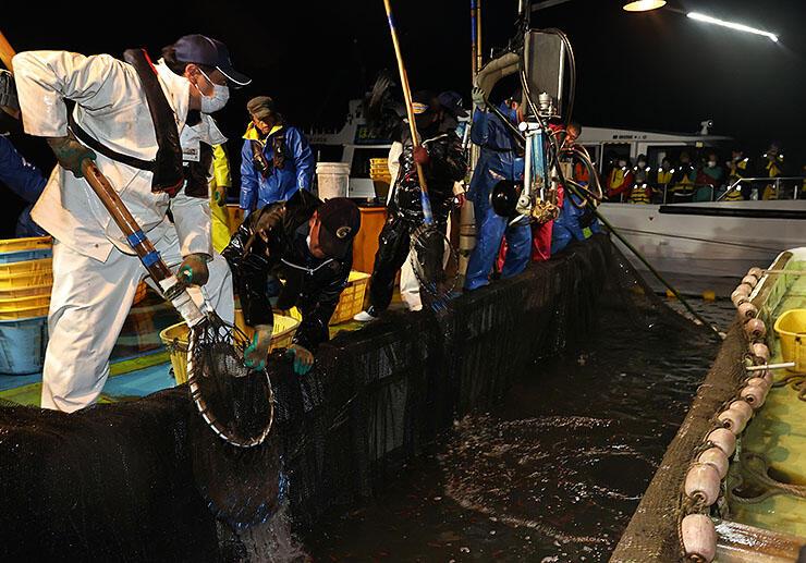 海上観光の参加者が見守る中、ホタルイカを引き揚げる漁師たち