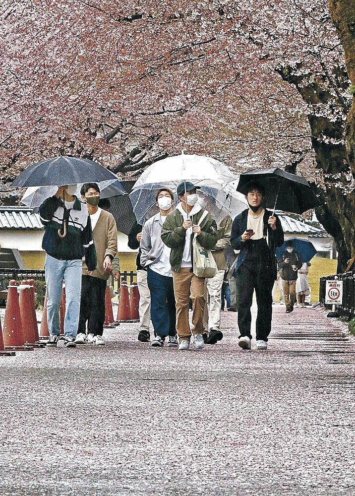 雨で散った花びらの上を歩く観光客=金沢城公園