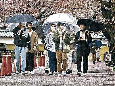 金沢城公園 散り始めの桜がじゅうたん