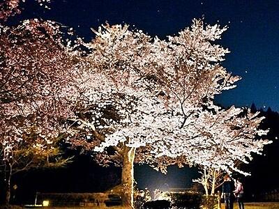 朝倉氏遺跡で糸桜ライトアップ 闇に浮かぶ幽玄な世界