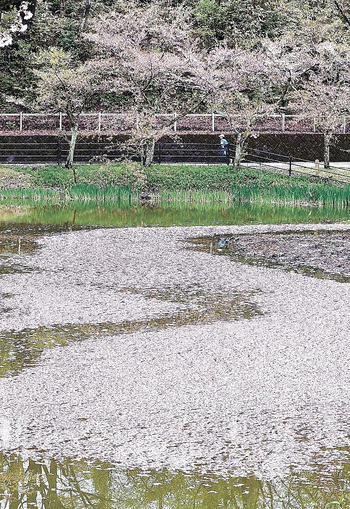水面に浮かぶ花いかだ=金沢市の奥卯辰山健民公園