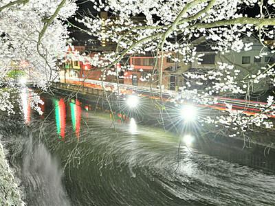 春宵のひととき、幻想的桜の世界 諏訪の高島公園と三つの寺
