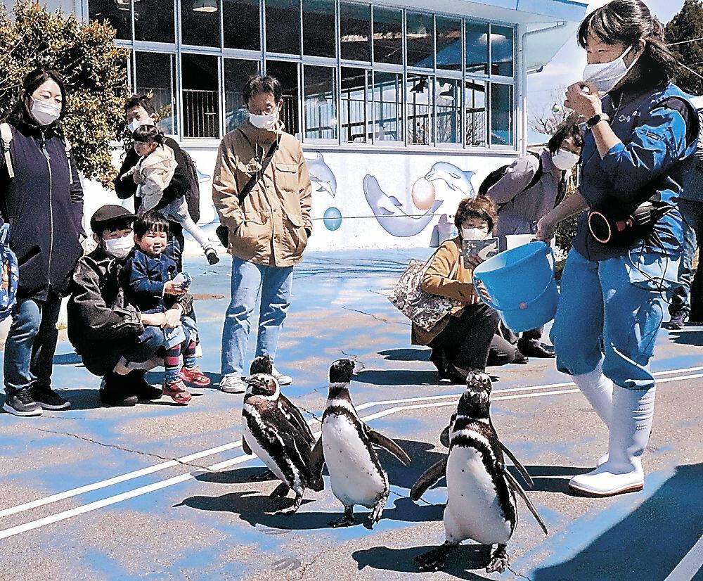 音楽に合わせて行進するペンギン=七尾市ののとじま臨海公園水族館