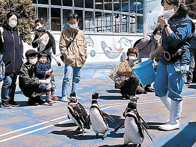 軽快、ペンギン行進 のとじま水族館 音楽祭に合わせ