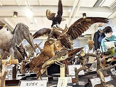 足羽三山は野鳥の宝庫 市自然史博物館ではく製100体