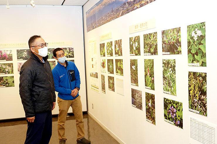 立山黒部アルペンルートで生育する花を紹介する展示