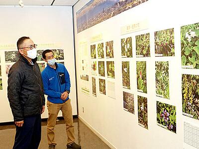 アルペンルートの花紹介 カルデラ砂防博物館