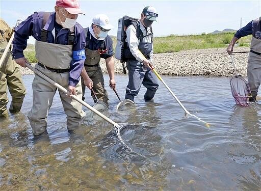 日野川で行われたアユなどの遡上調査=4月15日、福井県鯖江市石田上町