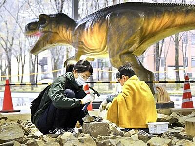 化石見つけた! 発掘体験センターが再開 福井県大野市、ティラノモニュメントも