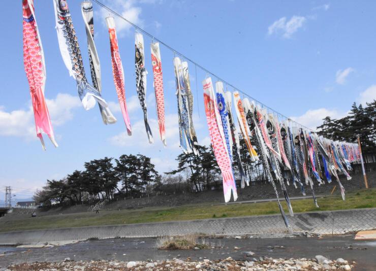 百々川に飾られた約100匹のこいのぼり=19日