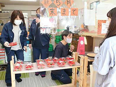 大ぶりイチゴ最盛期 入善、5月末まで販売