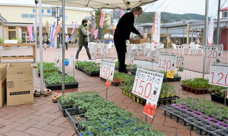 道の駅あおきで開かれている野菜の「苗木市」