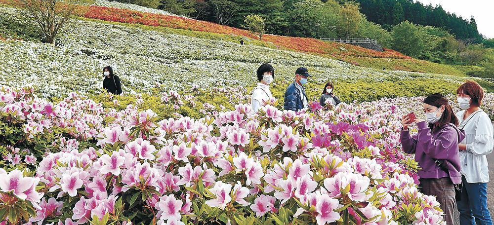 見頃のツツジを楽しむ来園客=金沢市の大乗寺丘陵公園