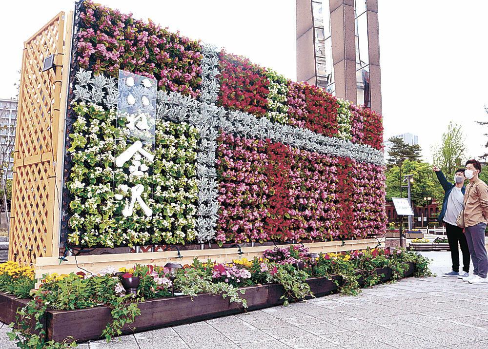 季節の花が飾り付けられた立体花壇=金沢市役所庁舎前広場