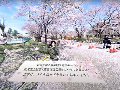 満開の桜 VR動画で体感 上越・高田城址公園
