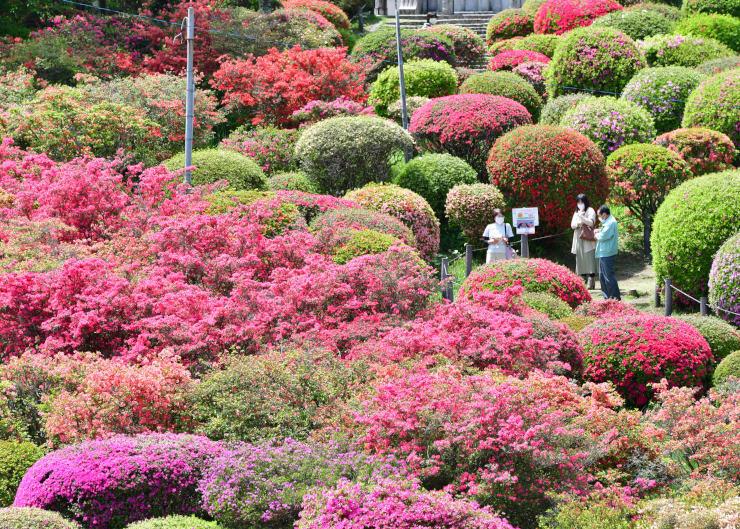 ツツジの花で彩られた鶴峯公園
