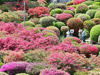 視界いっぱい、ドーム形やハート形 岡谷・鶴峯公園