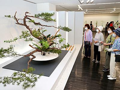 大作華やか 節目彩る 池坊富山支部創立80周年展