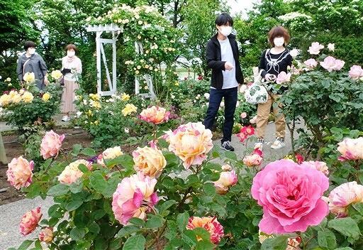 色とりどりのバラが咲きほこる園内=5月19日、福井県坂井市春江町のゆりの里公園