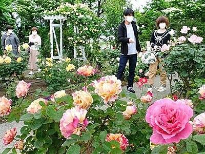 麗しきバラ150種類230株 坂井市ゆりの里公園