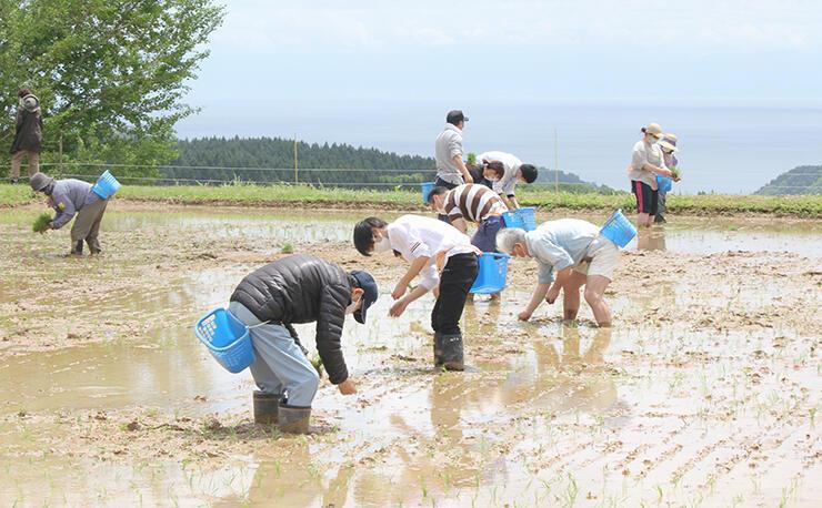 富山湾を臨む棚田で田植えをする「棚田オーナー」ら