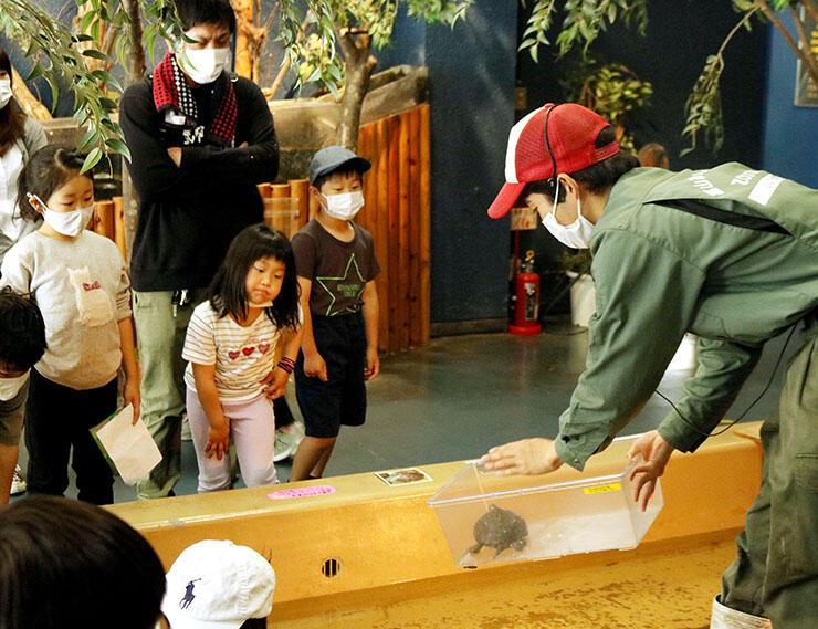 カメの生態について説明する飼育担当者(右)