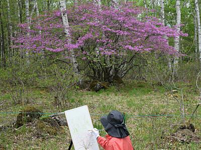 「高原の貴婦人」赤紫の花、優美に 佐久穂・八千穂高原