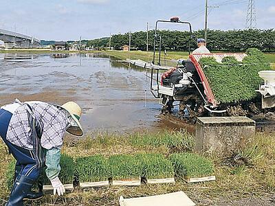 「山田錦」田植え開始 加賀・鹿野酒造