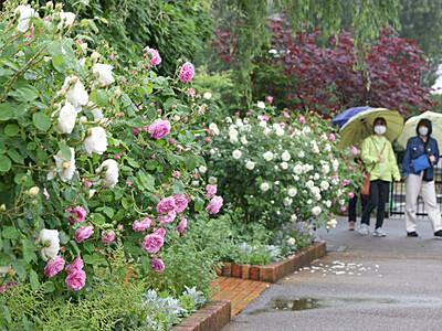 色鮮やか 花の祭典 見附・イングリッシュガーデン