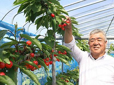独学で即日完売の高級フルーツ栽培 大沢野の60代男性