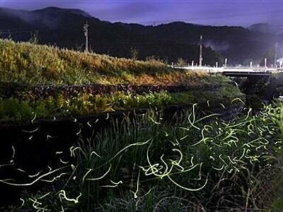 漆黒の夜空にホタル輝く 福井県鯖江市・河和田地区でピーク