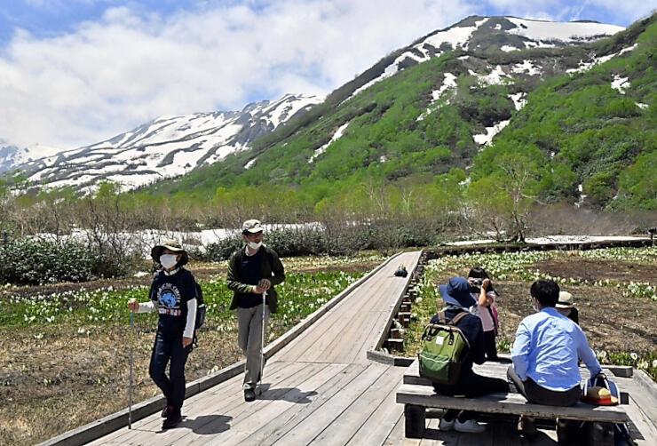 残雪と新緑、ミズバショウが織りなす景色を楽しむ人たち=12日午後0時34分、小谷村の栂池自然園