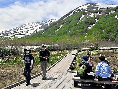 新緑と残雪の北アルプス 栂池自然園オープン