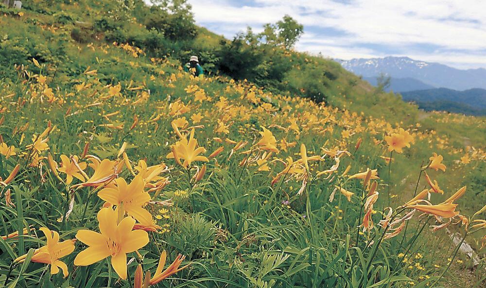 14日にオープンガーデンを始める「白山高山植物園」=白山市白峰