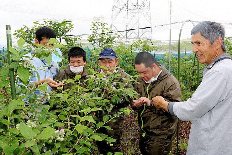ブルーベリーの実を収穫し味見する桶川さん(右)とつつじ苑の利用者ら
