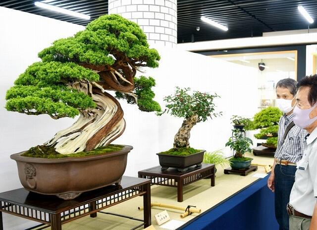 25人が力作を出品した合同盆栽展=6月19日、福井県福井市の福井県産業会館
