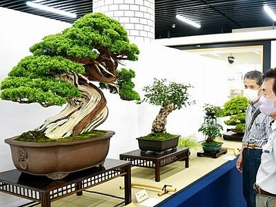 福井の盆栽愛好家25人の力作一堂 県産業会館で合同展