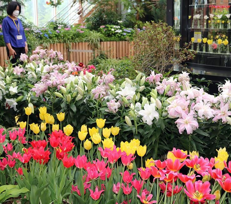 かれんなユリと色鮮やかなチューリップが咲き誇る会場