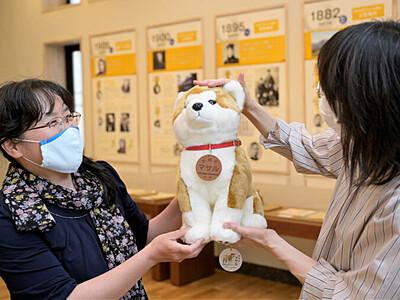 秋田犬「マサル」青木と大館つなぐ 五島慶太未来創造館に縫いぐるみ届く