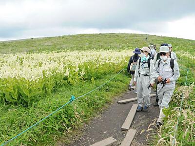 観光シーズン控え、霧ケ峰パトロール 諏訪市が雑木や遊歩道確認