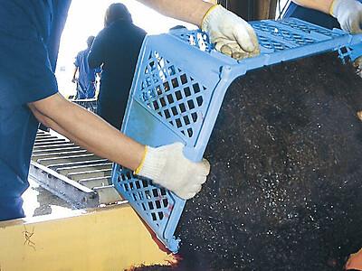 輪島に夏到来 海女の素潜り漁が解禁