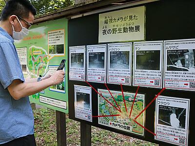 夜の動物 動画で見よう 富山市ファミリーパーク、園内にQRコード
